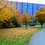 Autumn colours at Adelphi roundabout, Preston