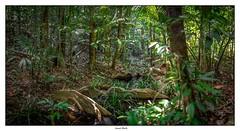 Petite crique dans la forêt