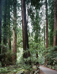 Muir Woods. Original image from Carol M. Highsmith's America, Library of Congress collection. Digitally enhanced by rawpixel.