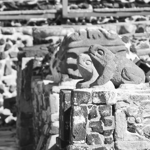 Aztec Frogs