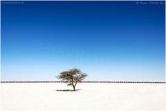 'Mauritrainia'