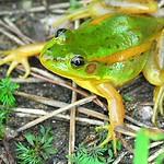 LG디스플레이, 생물다양성 보존활동 적극 나서.