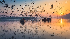 A River of Yamuna.  #beautiful #photooftheday #instagood #wear #painting #oneplus #streetofdelhi #india #indiaundiscovered #indiapictures #photojournalist #india #newdelhi #_ipc #ndia #indiaphotosociety #_iip #creativimagemagazine #clicksindiclicks #pti #