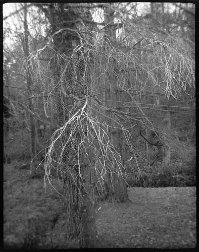 branches barebranches sunlit forest asheville northcarolina ferrania tanit farraniatanit rerapan400 ilfordilfosol3developer halfframe 127 127film film monochrome monochromatic blackandwhite landscape