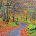 The Birnam Hill Path