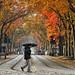 Rain...Fall Sacramento, CA by joe chan photos
