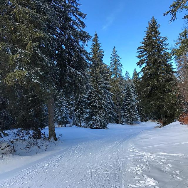 Work less, ski more. #nordicskiing #crosscountryskiing #vercors #frenchalps