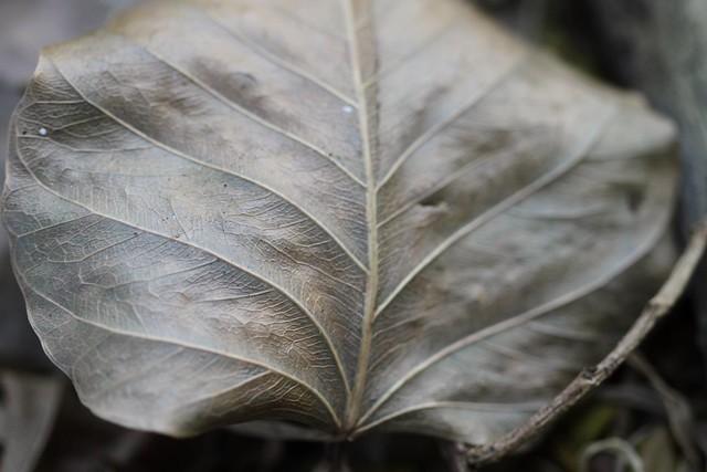 Leaf, Canon EOS 7D, Canon EF 100mm f/2.8 Macro USM