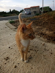 IMG_20180916_082858 - Photo of Montner