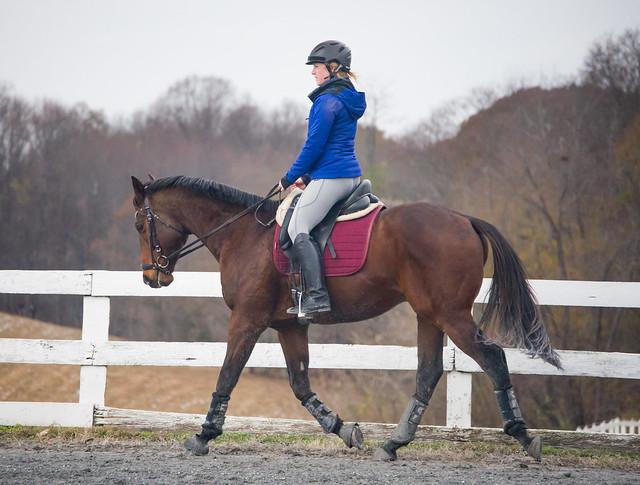 20181116 Austen's Ponies