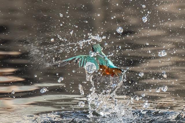 20181125-kingfisher-DSC_9967