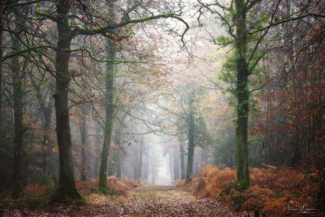 The silent walk