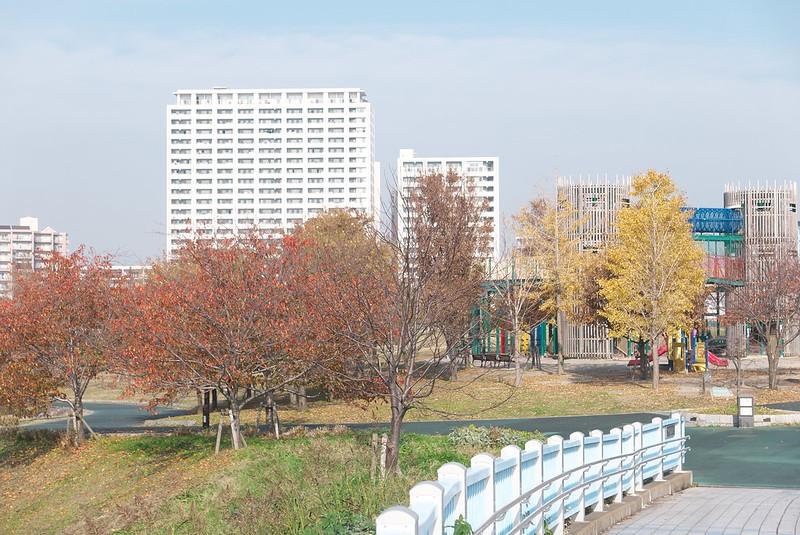 荒川区南千住 汐入公園の黄葉
