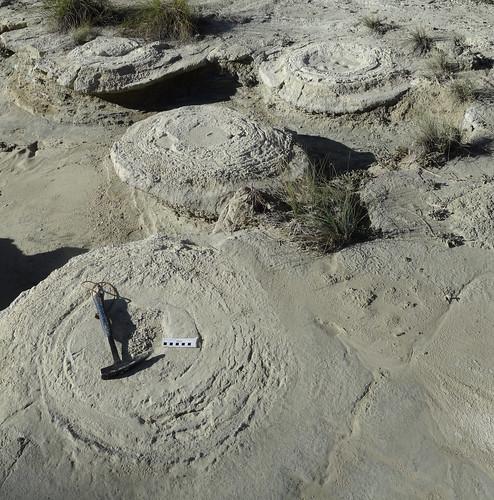 Megasismitas en depósitos lacustres - Rambla de los Pilares, Castilléjar (Granada, España) - 09