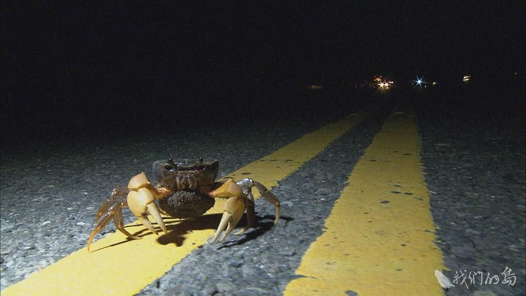 984-2-8從民間到官方一起想方設法,幫陸蟹找活路。