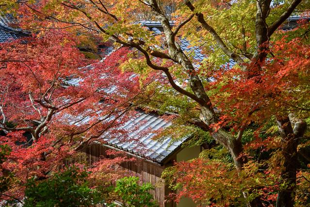 百済寺3・Hyakusaiji Temple, Nikon D750, AF-S VR Zoom-Nikkor 24-85mm f/3.5-4.5G IF-ED