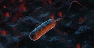 bacteria vibrio