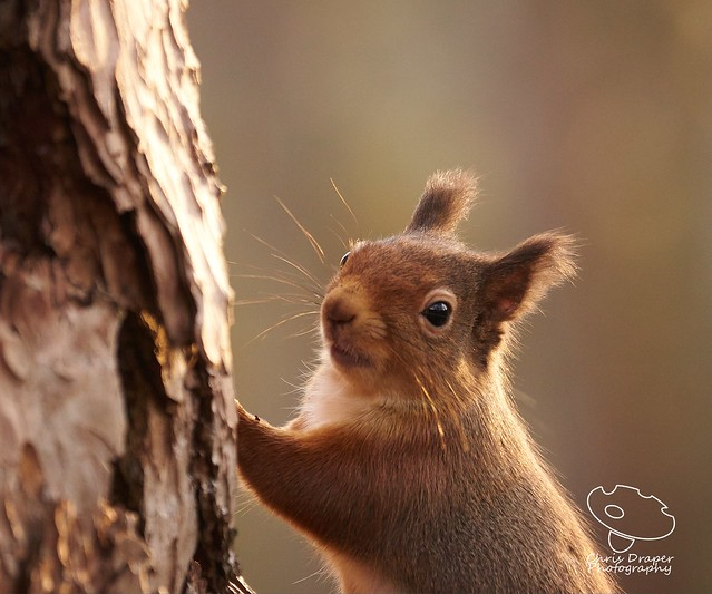A cheeky looking squirrel, Sony ILCA-77M2, Sony 70-300mm F4.5-5.6 G SSM (SAL70300G)