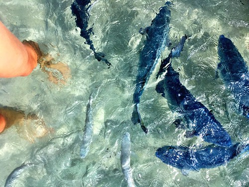 Lord Howe Island : Feeding the fish at Neds Beach | by miaow