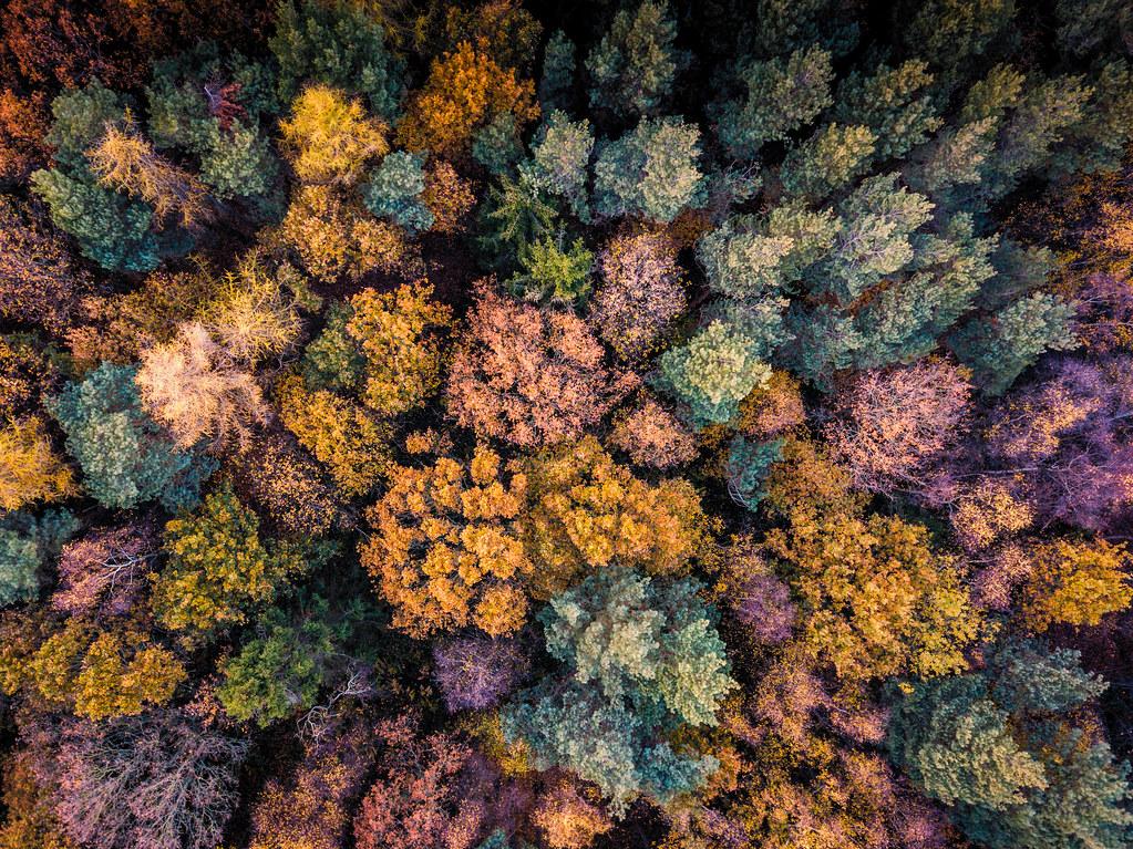 Trent Park Autumn-11