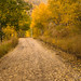 Let's Explore on this Fall  Day by Marsha Kirschbaum