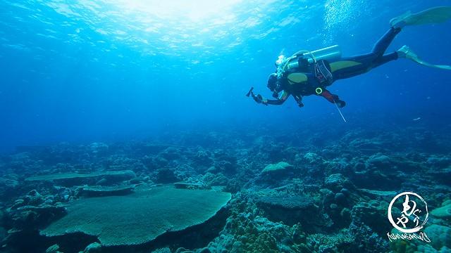 大きな珊瑚も点在です。