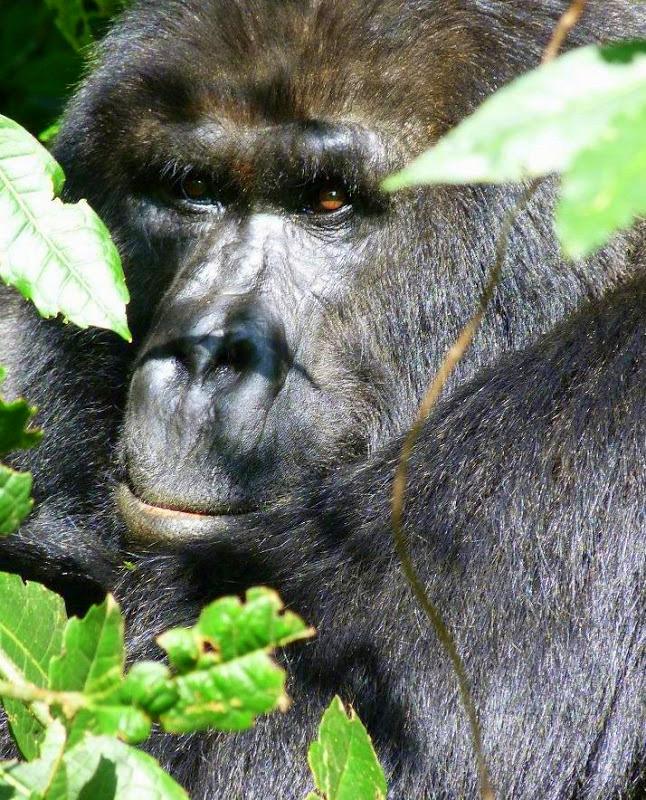 My overlanding adventure took me from tanzania trip into uganda
