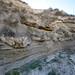 Megasismitas en depósitos lacustres - Rambla de los Pilares, Castilléjar (Granada, España) - 02