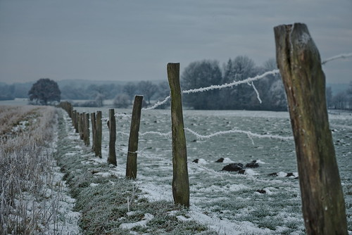 Winter fence in the morning