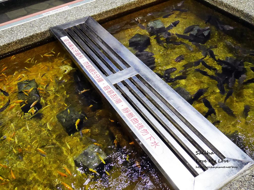 宜蘭礁溪一日遊景點推薦礁溪湯圍溝重口味溫泉魚去角質 (12)
