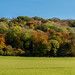Autumn in the Chilterns