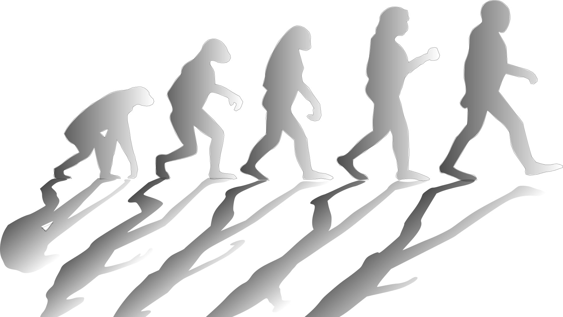 Graphic showing states of human evolution
