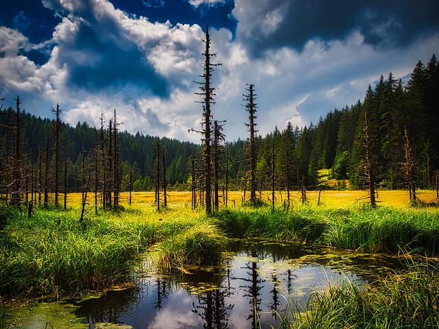 Magic swamp landscape