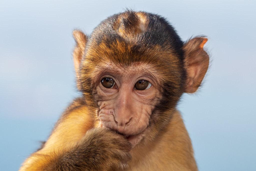 Fotos de animales de todo tipo incluyendo mascotas que más te gustan - Página 12 45655762062_a2c6cfc094_b