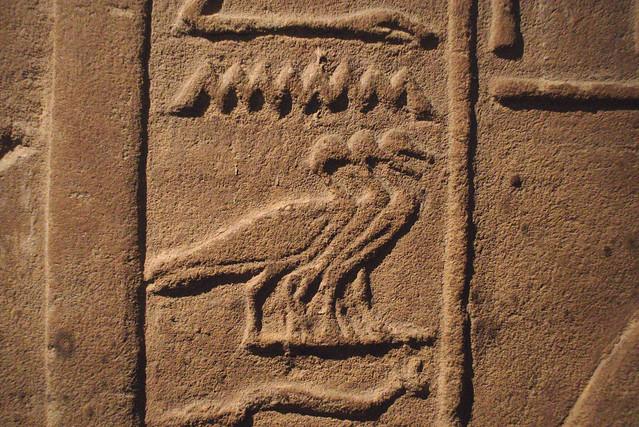 hiéroglyphe canards