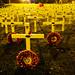 Remembrance - Aldridge   PB151794sm