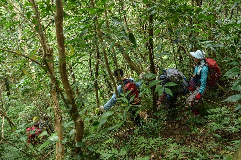 茶留凡山山頂寬稜植被 (5)