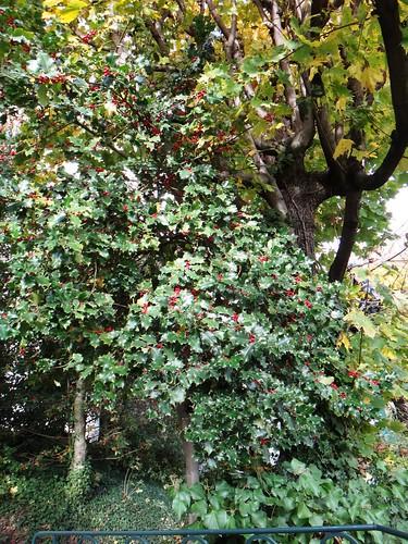 Знакомые листья