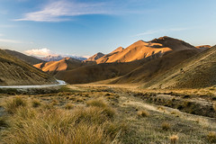 Tussock grasses, Lindis Pass at sunset, Central Otago