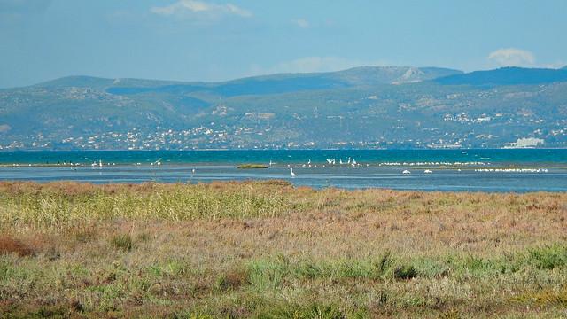 Birds at Oropos lagoon, Nikon COOLPIX AW110