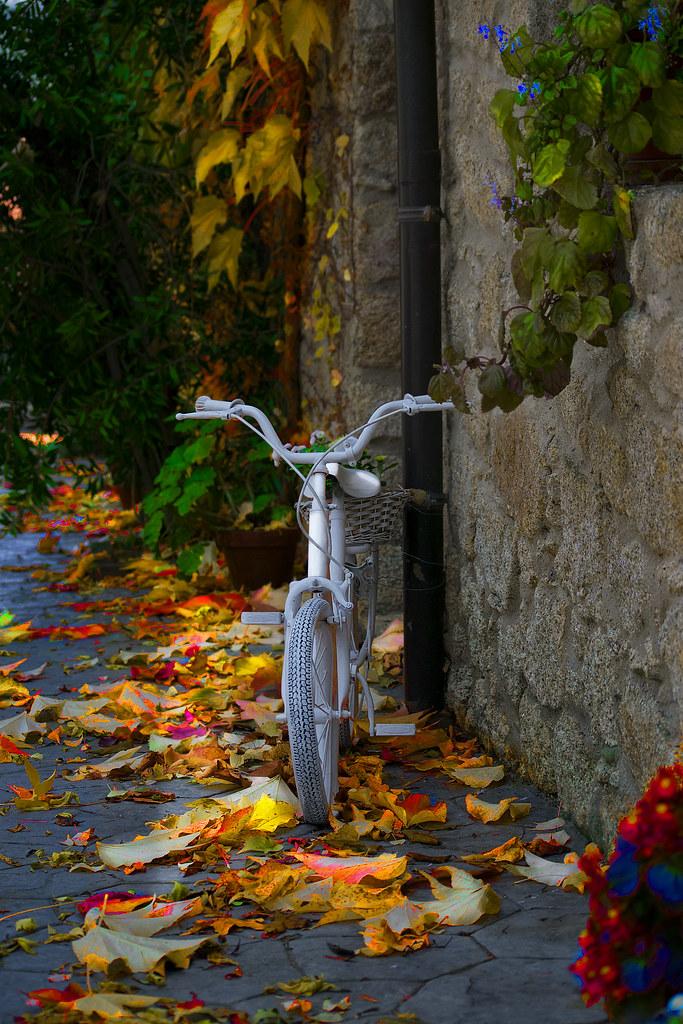 Color de otoño 31102071607_695a3efc05_b