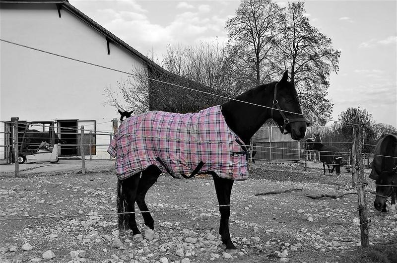 Horses 20.11 (6)
