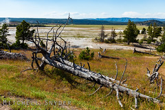 Yellowstone National Park - Favorites - 19