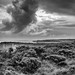 Blue Mountains - Monochrome-1.jpg by John Wright8
