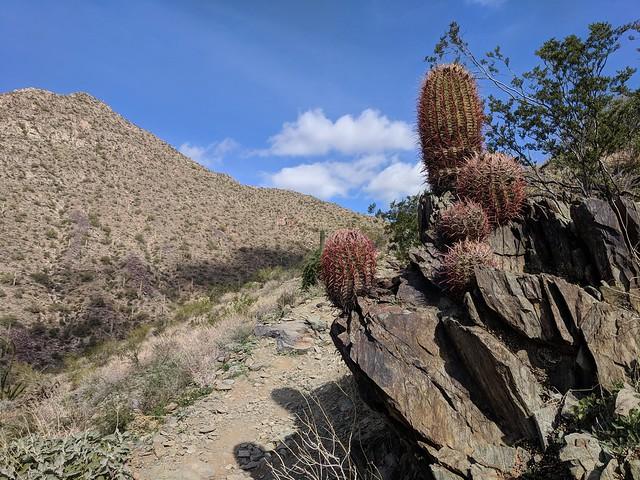 Cactus growing on rocks!