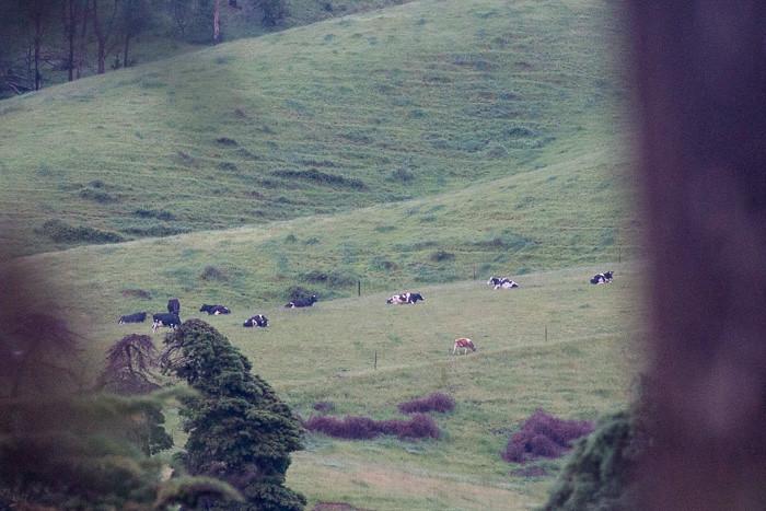 A tranquil rural scene