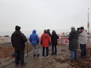 Birding at Bradstreet's Landing November 2018 by Kaoru Tsubone