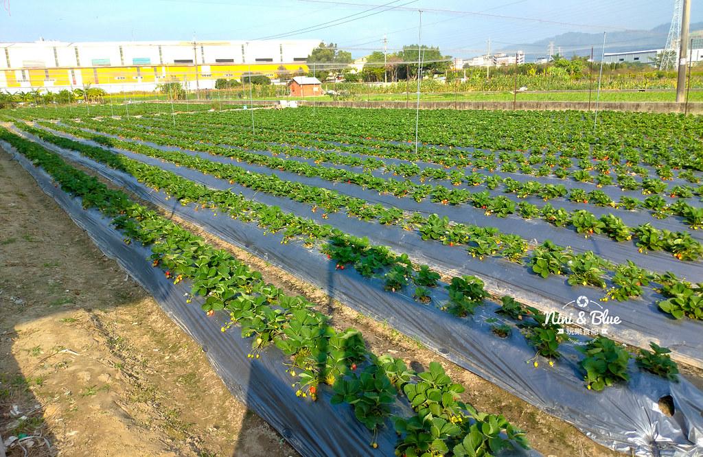 小農夫草莓園08