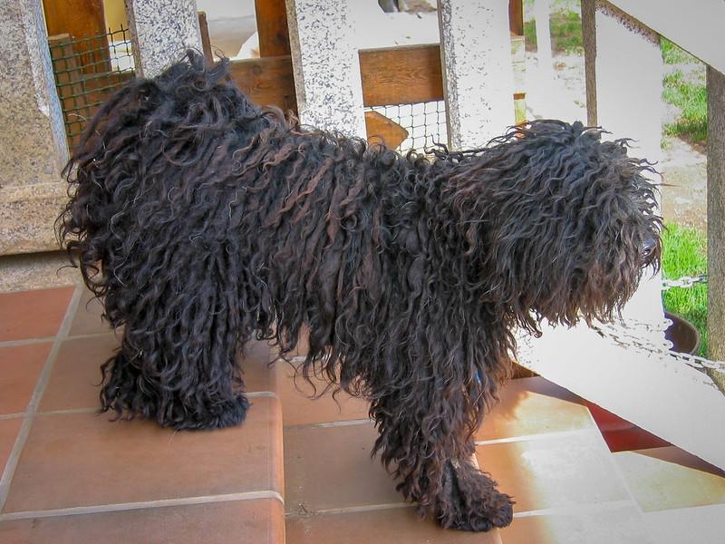 Fotos de animales de todo tipo incluyendo mascotas que más te gustan - Página 14 46264709332_3f12d4df84_c