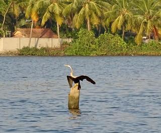 Kerala water bird